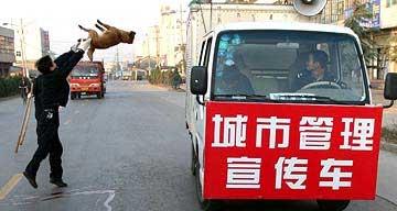 50000 собак в Китае уничтожено из-за угрозы распространения бешенства